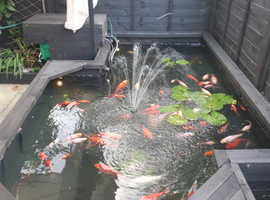 Fish Rehoming Enfield