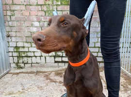 Eurodobie looking for perfect home