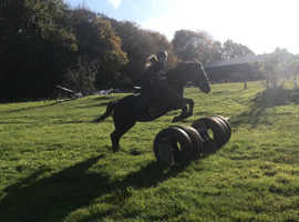 WANTED all rounder for young confident rider