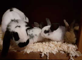 5 baby rabbits for sale