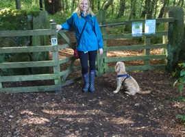 Dog Skills for Life; training & puppy socialisation classes