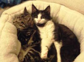 Kitten/cat foster