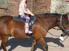 1st pony