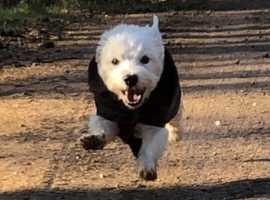 Dog Walker Clanfield, Waterlooville- Walkabout Paws