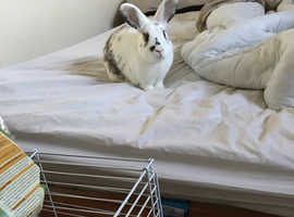 Buster a 3 year old male rabbit