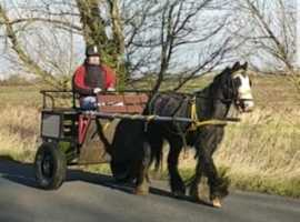 Quiet steady driving pony