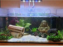 Complete aquarium set up including fish