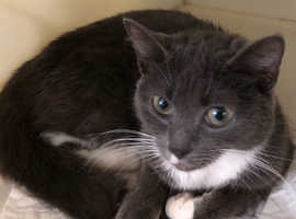 One year old female not neutered