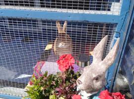 Luxury Rabbit & Guinea Pig Holiday Boarding