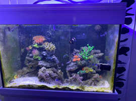 Marine fish tank full setup including livestuck