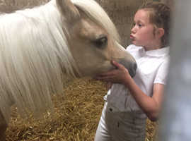 Buy/loan  a horse up to 15hh