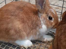 Cute friendly male rabbit