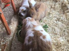 Rabbits requiring a new home