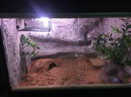 1ftx 2ft viv and leopard gecko