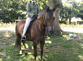 Gorgeous 12.2 hh pony for sale