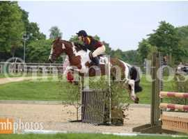Eventing/Showjumping 148 Pony