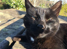 Rehoming affectionate female cat