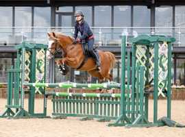 Brilliant all- round pony for sale