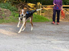 Introduction to Mantrailing Course 24th oct