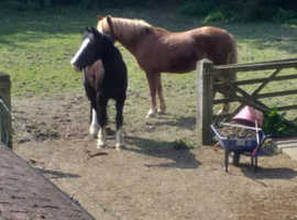 WANTED, Hampshire 2 stables and grazing for 2 ponies, within 15 mile radius