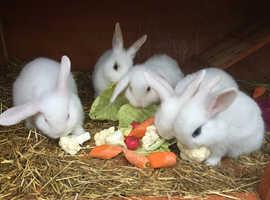 Beautiful, Healthy Baby Rabbits