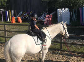 Lovely JC pony for sale or loan
