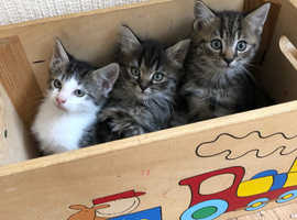 Very pretty kittens looking for their new forever home