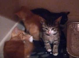 cute beautiful kittens