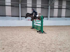 Show jumping and x country machine
