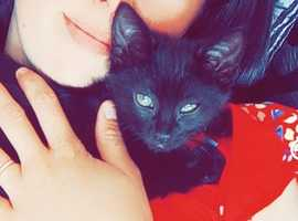 Kitten for rehoming  8 weeks