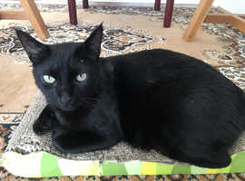 Our rescue cat Bagheera is missing from the CV9 area