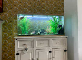 4ft fish tank + shabby chic cabinet  +fish