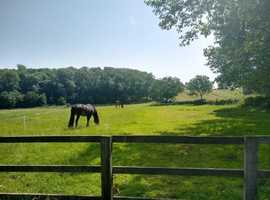 DIY livery grazing, menage, stables, great hacking available Bygrave near Baldock to share with our friendly mare