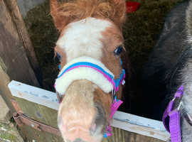 foal looking for his forever home x