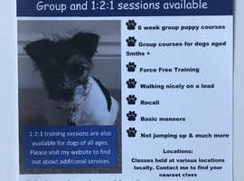 Fun 6 week puppy training courses - Hedge End