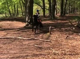 Wanted: 13.2hh-14.1hh pony