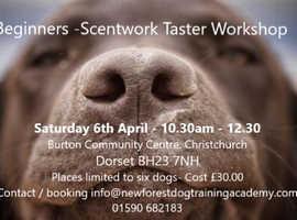 Scent Detection Training - Scentwork UK - Workshop