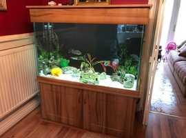 Fabulous 400 litre aquarium for sale