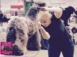 Become a Professional Dog Groomer with Abbfabb Academy for Dog Grooming Training