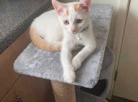 11 weeks kitten