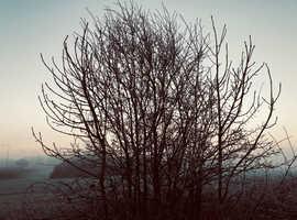 Birch Tree Services