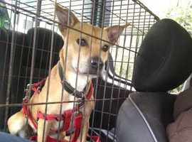 Foster and forever homes urgently required for rescue dogs