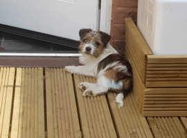 5 month old puppy