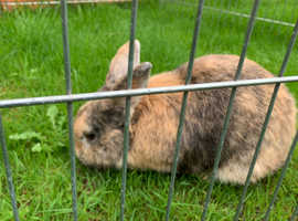 Male rabbit looking for a 5* home.