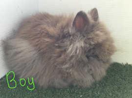 Beautiful boy Rabbits