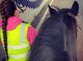 Offering training for horses and ponies