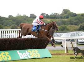 Ex race horse