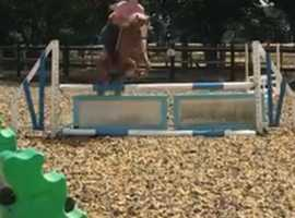 Beautiful 12.2h Speedy Jumping Pony