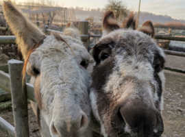 Wanted: Land for Two Rescue Donkeys