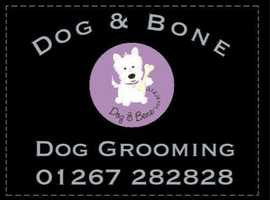 Dog and Bone Grooming. Salon and Full Mobile Salon Service